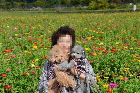 花の都公園花畑.jpg